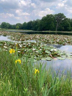 Naturpark in Arnheim-original
